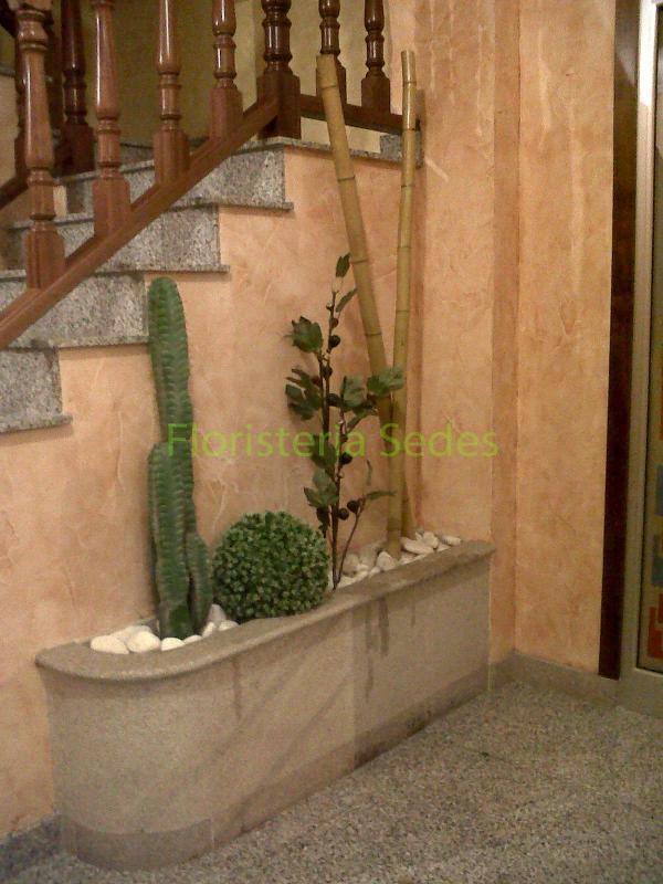 Decoraci n portal con bamb y cactus - Jardineras con bambu ...