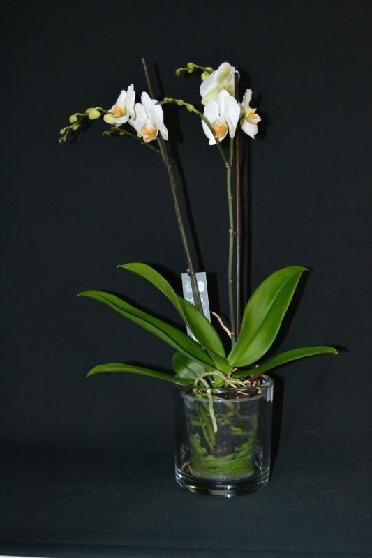 Maceta de cristal orquideas - Tiestos para orquideas ...